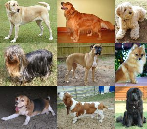 1024px-collage_of_nine_dogs